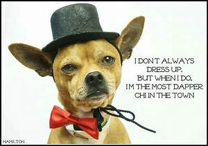 1642 best images about Chihuahua on Pinterest | Chihuahuas ...