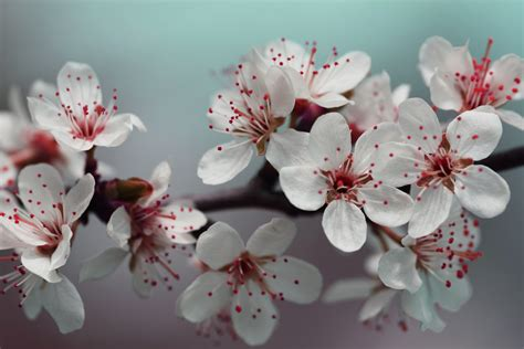 Free Images : tree nature branch white leaf flower