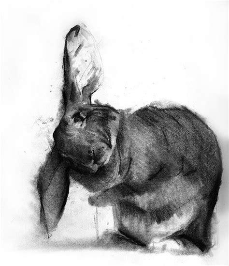 benjamin bjoerklund charcoal drawing   rabbit