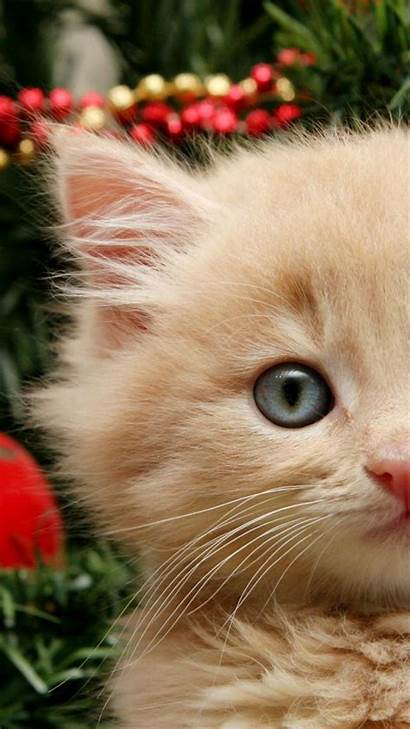 Christmas Cat Iphone Cats Kitty Funny Wallpapers