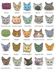 all cat breeds catsparella cats journal print and pocket