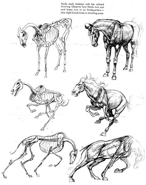 animal anatomy ideas  pinterest dog anatomy