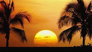 Collection of four circular tropical scenes of palm trees ...
