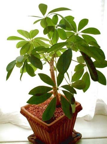 welche gruenpflanze ist das  bis  blaettrig garten