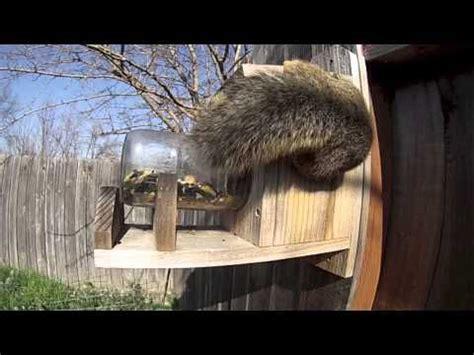 squirrel under glass feeder squirrel glass feeders by refined pallet awwwwww squirrel animals