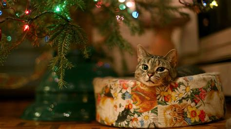 Christmas Cat Wallpaper (75+ Images