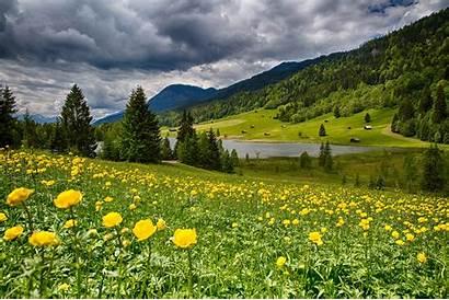 Bayern Flowers Mountain Germany Yellow Lake Bavaria