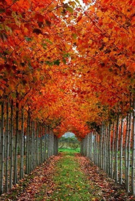 Beautiful Fall Barnorama