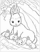 Coloring Rabbit Pages Children Simple Animals sketch template