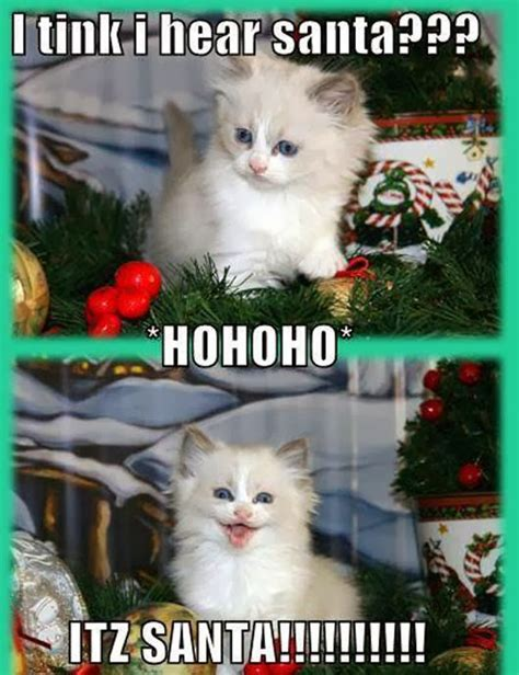 Cute Kitten Memes - animals and christmas funny animal meme collection 14 pictures animal space