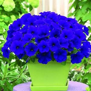 162 best images about gardening on Pinterest | Gardens ...