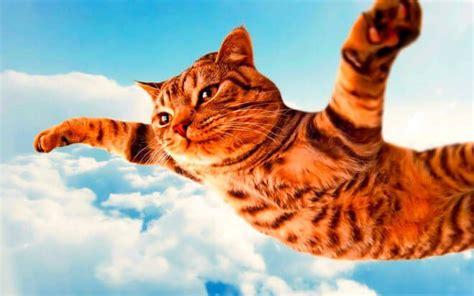 cani in cabina aereo cani e gatti in aereo compagnie aeree accettano