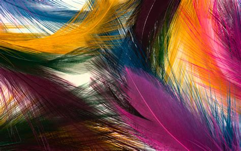 colored feathers multi colored feathers wallpapers and images wallpapers
