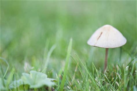 Gegen Pilze Im Garten by Pilze Im Garten