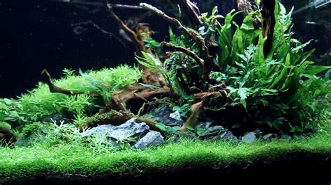 Aquascape Ada - aquascape ada 90p a come true update 70 days