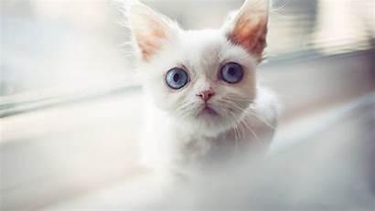 Cat Eyes Kitten Background Blur Staring Wallpapers