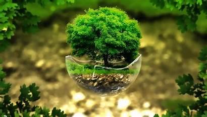 Bonsai Tree Nature Digital Plants Wallpapersafari Trees
