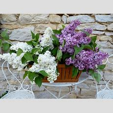 How To Make A Small Fragrant Garden  Fragrant Plants For