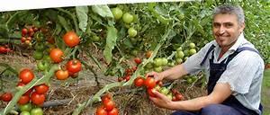 Tomaten Und Gurken Im Gewächshaus : besuch bei gurken und tomaten demeter g rtnerei sannmann ~ Frokenaadalensverden.com Haus und Dekorationen