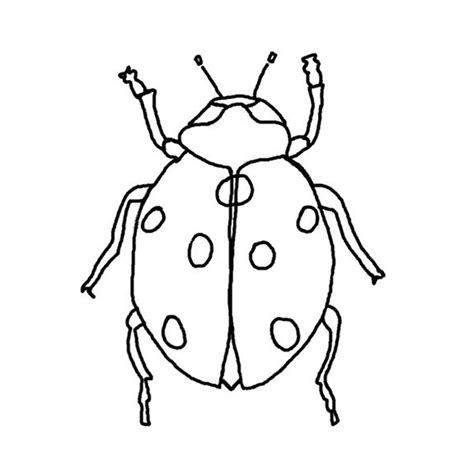 dessin de coloriage insecte  imprimer cp