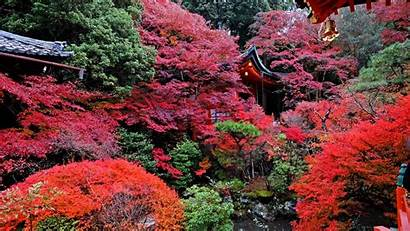 Japan Temple Autumn Kyoto 1920 Background 4k