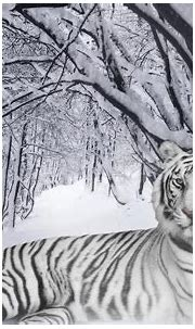Best 35 Bengal Tiger Pictures and Wallpapers   Tiger ...