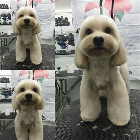 Pin By Dog Lover 4 Dog Lovers On Dog Grooming