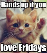 Image result for wishing you a great weekend cat pictures