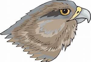 Free hawk clipart the cliparts 2 - Clipartix