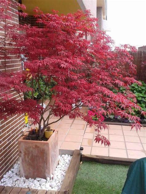 Bäume Für Japanischen Garten by Japanischer Ahorn Im Garten 50 Gestaltungsideen Garten