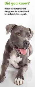 Una mujer murió por el ataque de su perro pitbull   Mi ...
