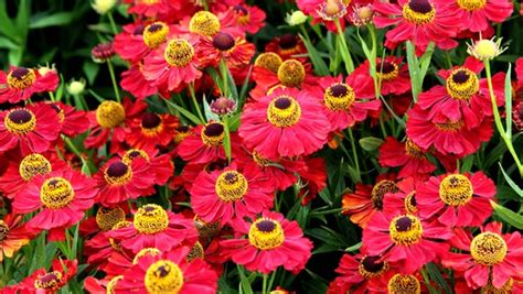Garten Pflanzen Im Herbst by Pflanzen Im Herbst B Ume Und Str Ucher Im Herbst Pflanzen