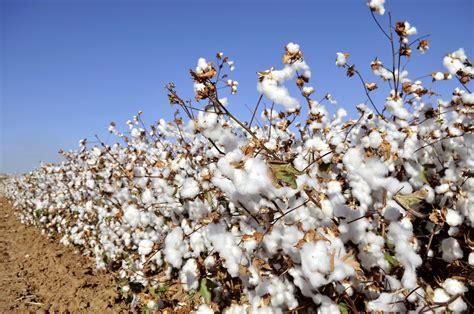 cotton planters 16 facts about cotton that you don t