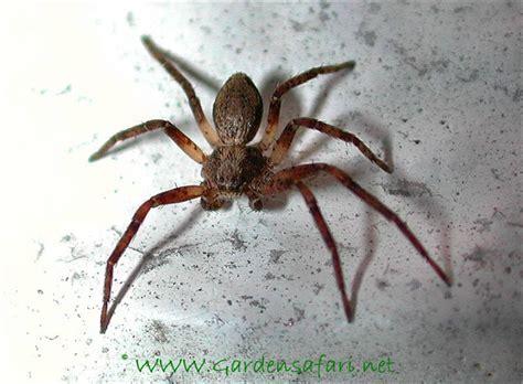 Gardensafari Garden Spiders (with Lots Of Pictures