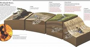 What Is Fossil  Simplified Paleontology
