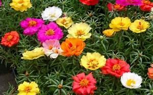 Balkonpflanzen Sonnig Winterhart : ber 1000 balkonpflanzen gartenpflanzen zimmerpflanzen ~ Michelbontemps.com Haus und Dekorationen