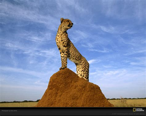 National Geographic Wallpapers Animals - wildlife national geographic 100 best wildlife animal