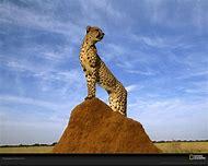 National Geographic Wildlife Animal