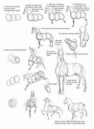 How to Draw Horse Anatomy