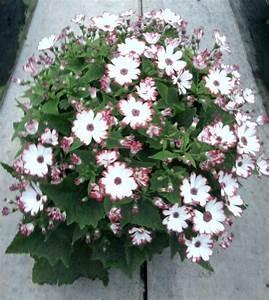 Grand Pot Plante : plante fleurie exterieur grand pot plastique maison ~ Premium-room.com Idées de Décoration