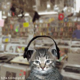 cats songs cats listening to