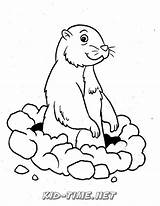 Gopher Coloring Printable Sheets Animals Visit Printables sketch template