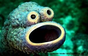 Cute Rare Sea Animals | Amazing Wallpapers
