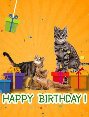 happy birthday  cats   kids ecards greeting cards