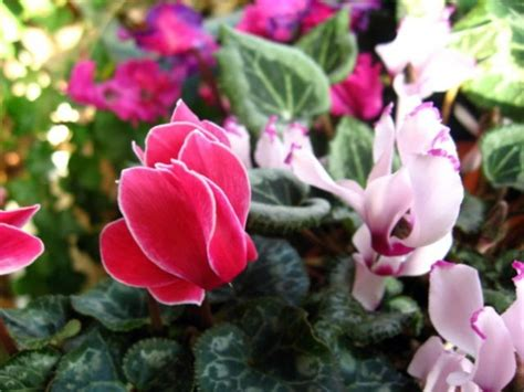 Flowering, Easy Care Potted Plants