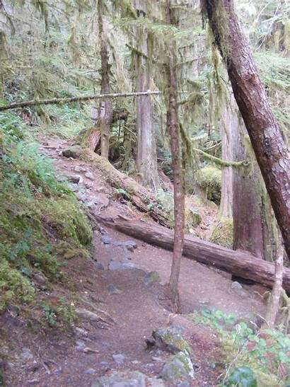 Staircase Olympic National Park Trail Rapids Campground