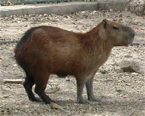 animales del llano mamiferos