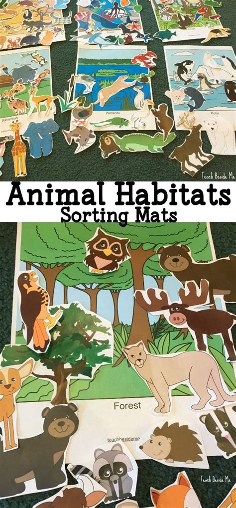 animal habitats printable sorting and play mats plays 310   6915f552e50e6e7f6ffeffcf5140d05e preschool science preschool classroom