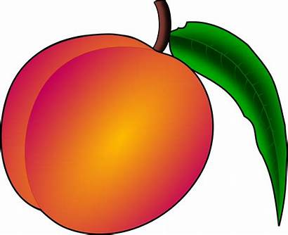 Peach Clipart Clip Fruit Durazno Nectarine Peaches