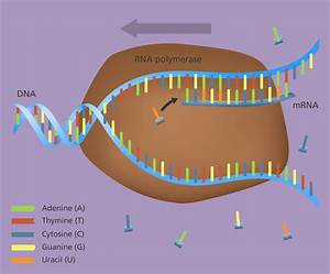 What Is Gene Expression